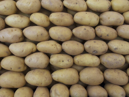Fresh potatoes yellow at a farmers market  photo