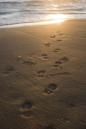footsteps: beach wave and footsteps at sunset time