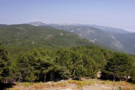Ida Mountain-Kaz Daglari in Turkey. (in Turkish: Kazdagi, meaning Goose Mountain), Turkey. Beautiful nature..Ida Mountain has endemic plants and trees . Banco de Imagens