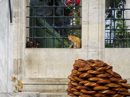 Turkish bagel (simit) and cats in the mosque garden, Turkish traditions. Istanbul, Turkey 에디토리얼