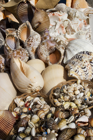 sea shells for sale  in sell souvenir shop. Turkey