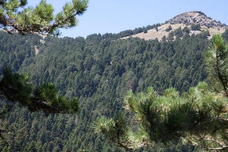 Ida Mountain-Kaz Mountains in Turkey. (in Turkish: Kazdagi, meaning Goose Mountain), Turkey. Beautiful nature..Ida Mountain has endemic plants and trees.