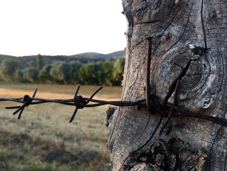 barbed wire: barbed wire Stock Photo