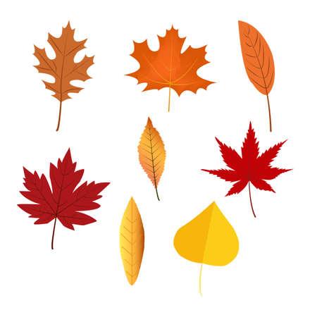 Conjunto de hojas de otoño, ilustración vectorial. Aislado sobre fondo blanco.