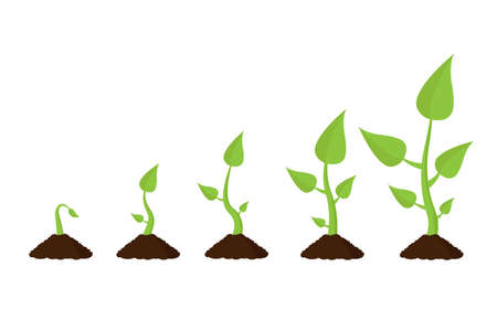 Growing plant stages. Infographic arbor. Isolated vector illustration.