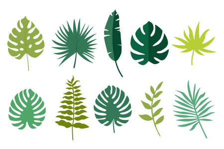 Tropical leaves set. Set of tropical plants. Isolated vector illustration.  イラスト・ベクター素材
