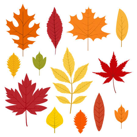 Autumn leaves collection. Colorful leafs in cartoon style. Isolated vector illustration on white background. Vettoriali