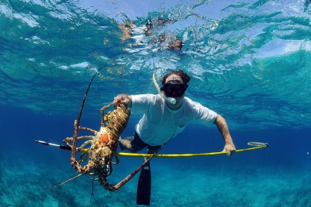 Underwater image of man catching lobster on a speargun while free diving in ocean