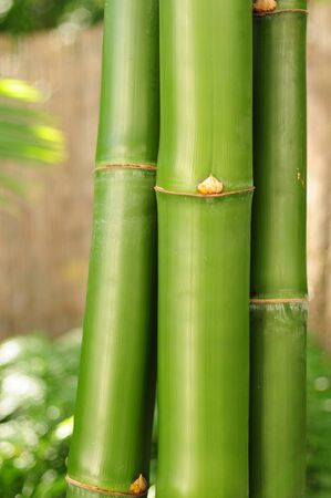 Three bamboo branches in outdoor setting