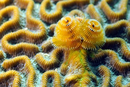 Soft coral marine life in ocean in tropical location