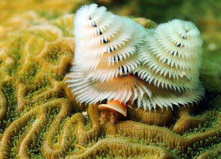 Soft coral marine life in tropical location