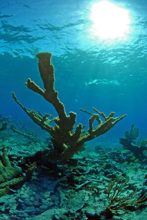 coral marine life in ocean tropical location