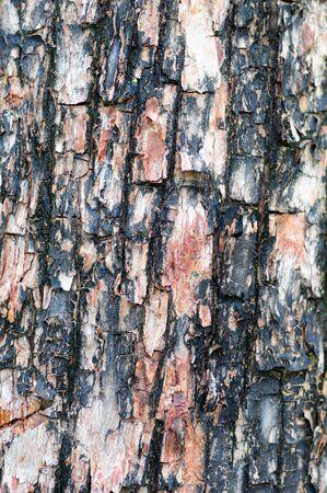 close up image: Close up image of textured tree bark Stock Photo