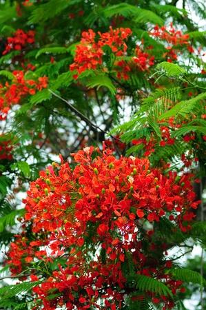 Orchid Blumen Blühen Auf Baum In Den Tropischen Standort Lizenzfreie ...