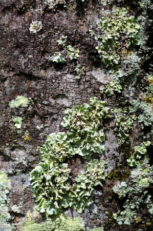Close up view of Green fungus growth on tree bark in nature photo