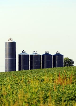 Five silos in a soybean field on farm