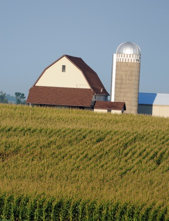 Corn stalks on a farm with silo and barn in rural countryside Stock Photo - 17709255