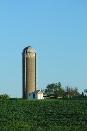 soybean farm with silo and crops Stock Photo - 17709264