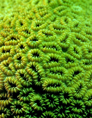 close up image that captures the details of coral on reef Stock Photo - 17709465