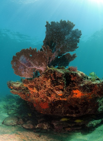 hard coral: Beautiful underwater seascape with sea fan, hard coral and soft coral Stock Photo