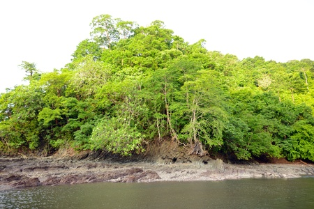 Tropical river in Panama with trees  photo