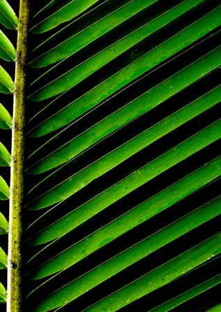 green background with a lush tropical palm frond photo