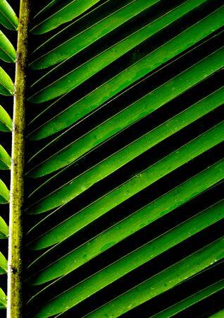 palm frond: sfondo verde con un lussureggiante tropicale fronda di palma