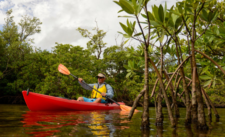 kayak: man in a red kayak through the mangroves in a tropical destination Stock Photo