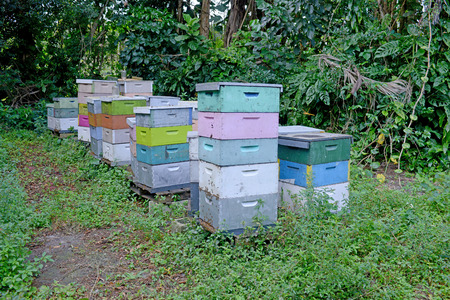 commercial beehives or apiary