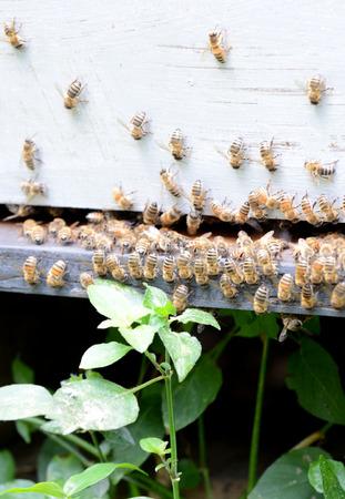 honey bees on beehive Stock Photo