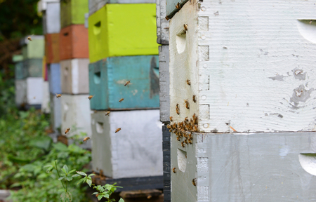 bees flying around colorful beehives Stock Photo