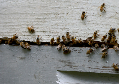 close-up of bees swarming a bee hive