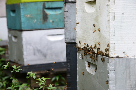 bees flying around hives at aviary