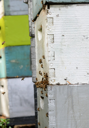 honey bees on colorful beehives Stock Photo