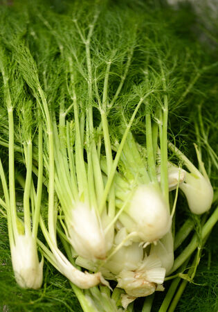 raw fennel vegetables at a farmer's market