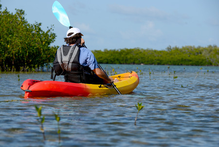 mangroves: Man kayaking in  bay with mangroves on the bayside