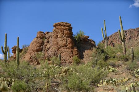 tuscon: saguaro cactus in rock formation in american west landscape