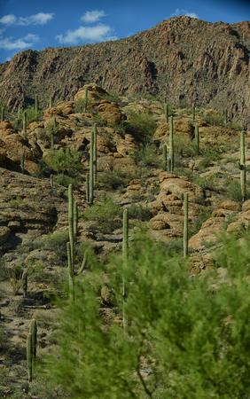 tuscon: beautiful mountain desert scene with saguaro cacti plants Stock Photo