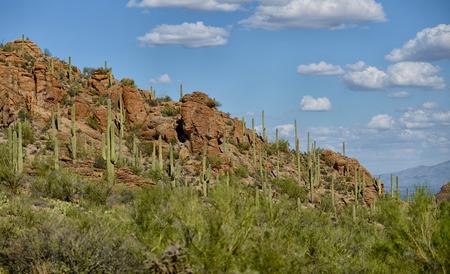 tuscon: mountain in arizona with cacti growing