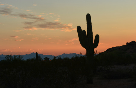 arizona sunset: arizona sunset  with a silhouette of a cactus Stock Photo