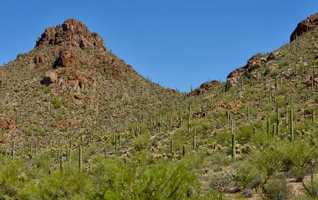 tuscon: saguaro national park in tucson arizona with scenic view Stock Photo