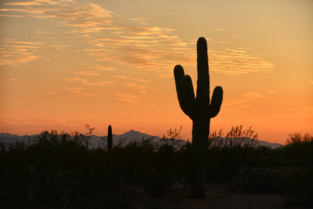 arizona sunset: arizona sunset  with a silhouette of a saguaro cactus in the american southwest Stock Photo