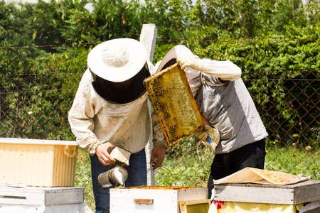 honey picking