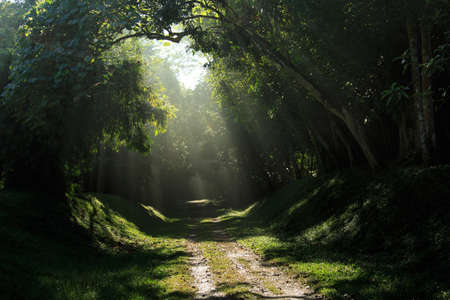 beautiful morning sunray. ray of light in green forest