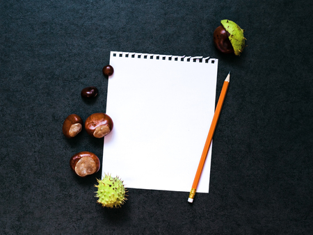 lapiz y papel: Mock-up with  chestnuts and a sheet of paper and pencil Foto de archivo