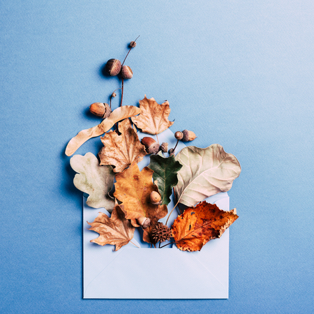 Dry leaves in blue envelop on pink background. Autumn concept card.
