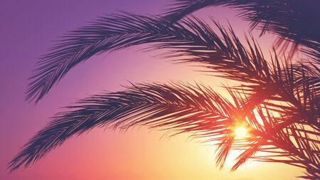 Silhouette of palm leaves against sunset. Summer vacation.