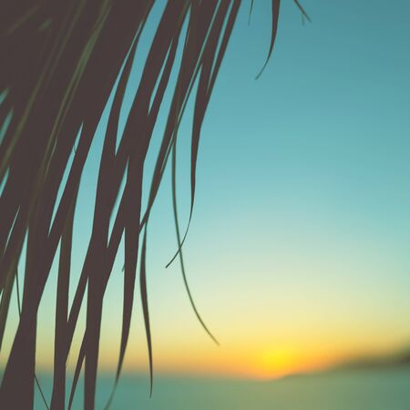 Palm leave against sunset on the sea. Summer vacation, soft focus. Stock Photo