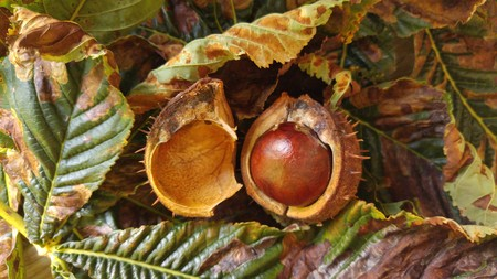conkers: Conkers