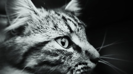prowl: Close up of domestic cat on the prowl Stock Photo
